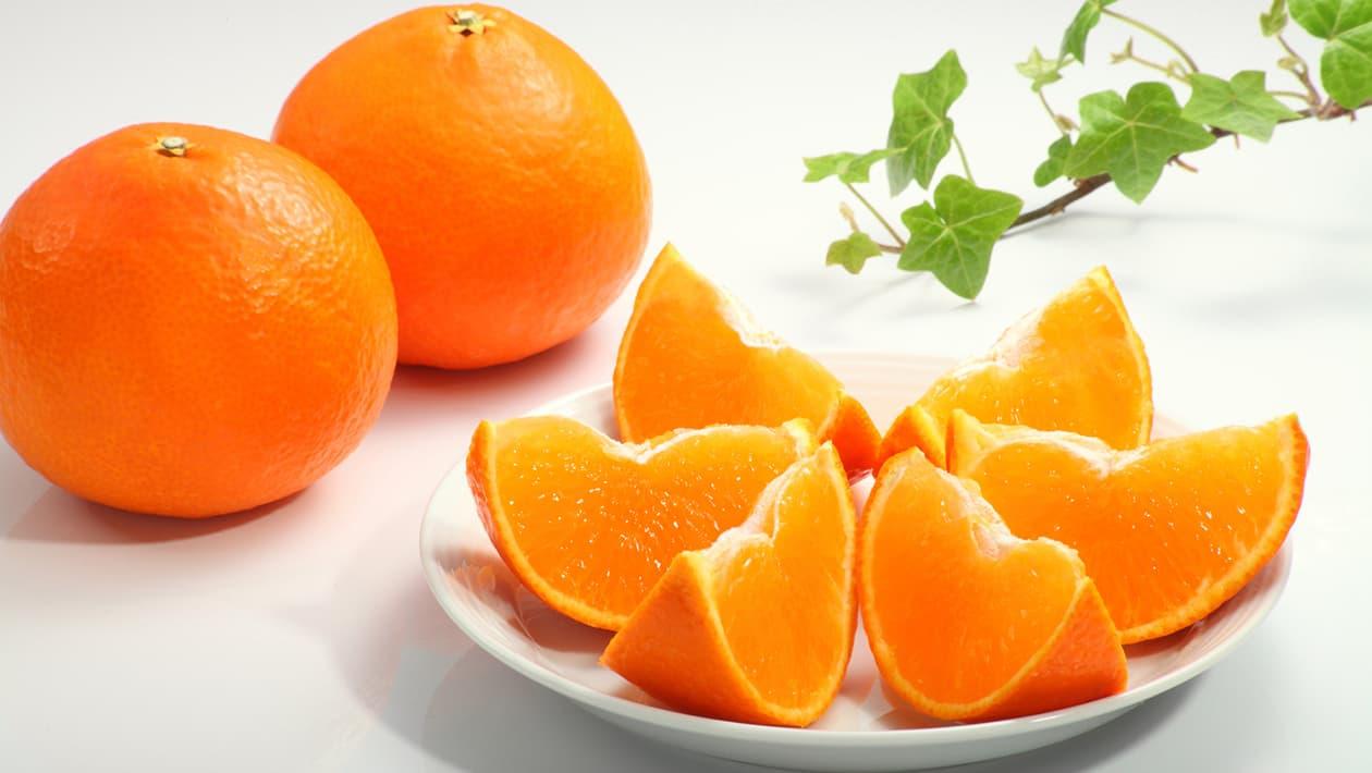 柑橘・みかん