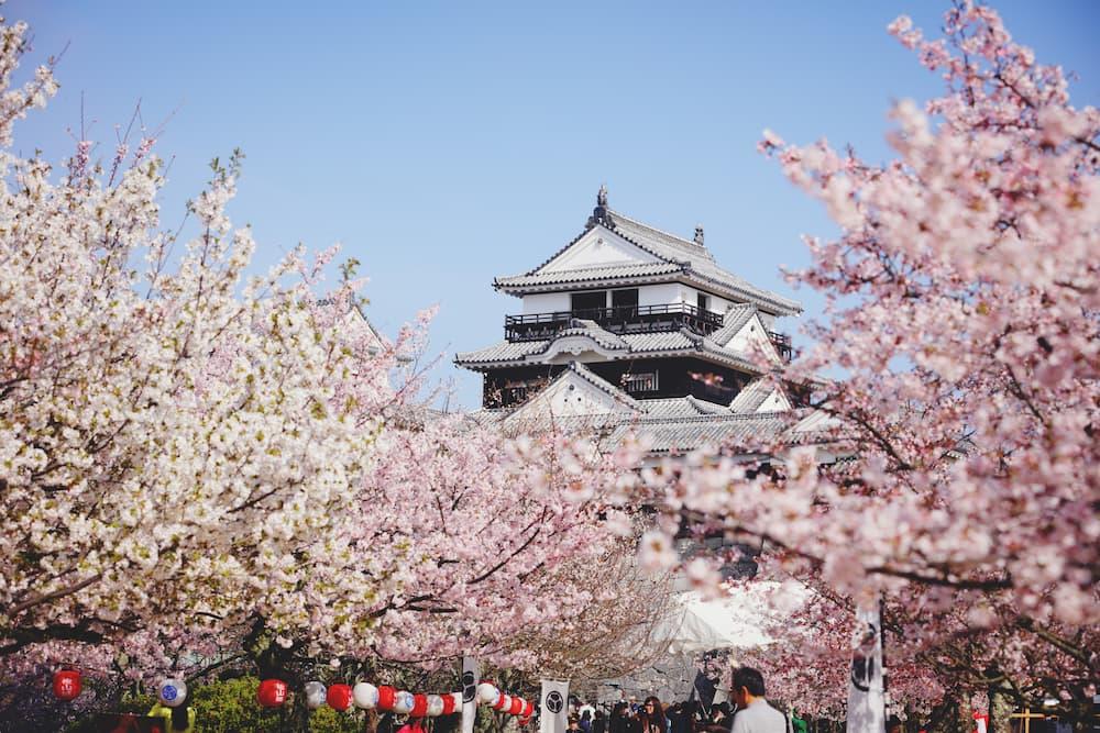 桜と城のコラボが織りなす絶景。やっぱり松山城の桜はすごい!